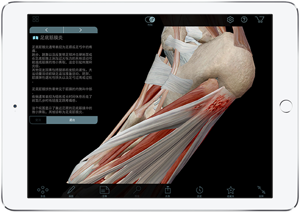 explore-apps_muscles_chinese