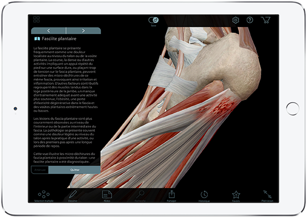 explore-apps_muscles_french