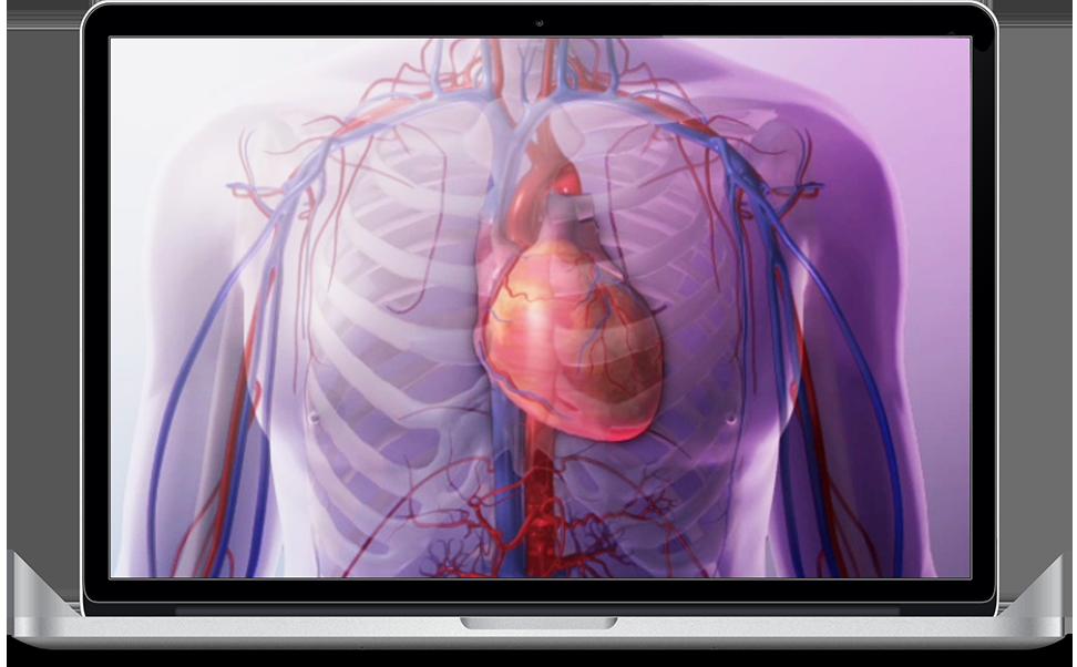 Heart & Circulatory Premium - Explore the heart and vascular anatomy