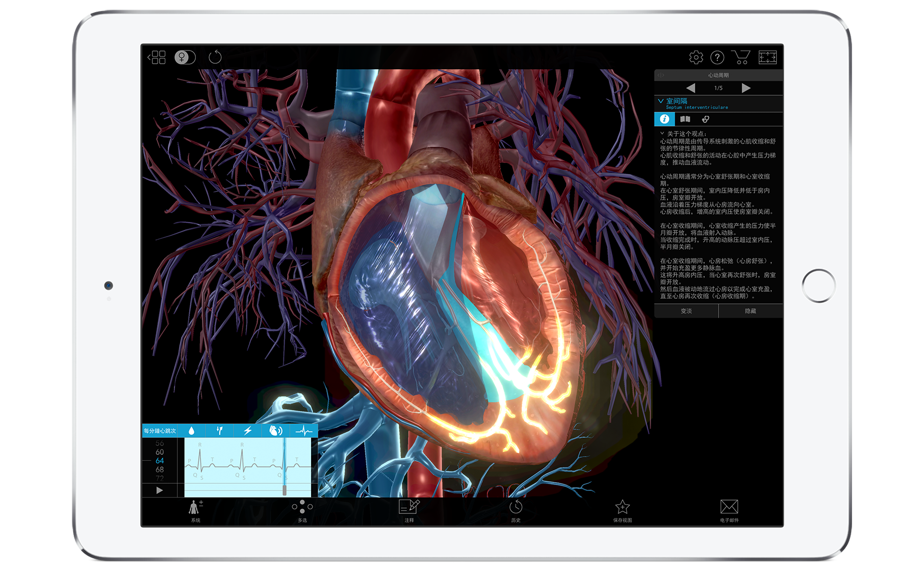 3d model of human heart from Pathology & Physiology
