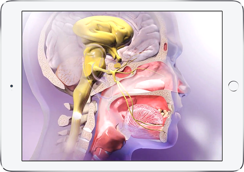 Physiology Animations - Visible Body\'s stunning animations in one app