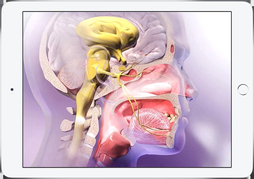 Physiologieanimationen - Die atemberaubenden Animationen von Visible ...