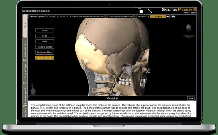 Skeleton Premium - a 3D exploration of the human skeleton