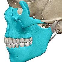 Best site to learn anatomy