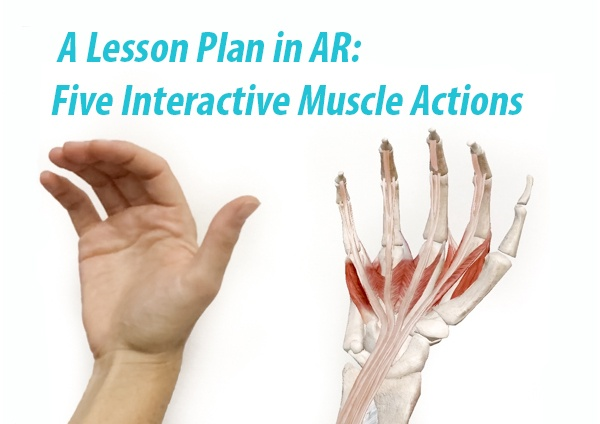 Muscle Actions AR Blog Title Image - FINAL.jpg