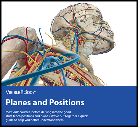 Visible Body eBook Planes and Positions