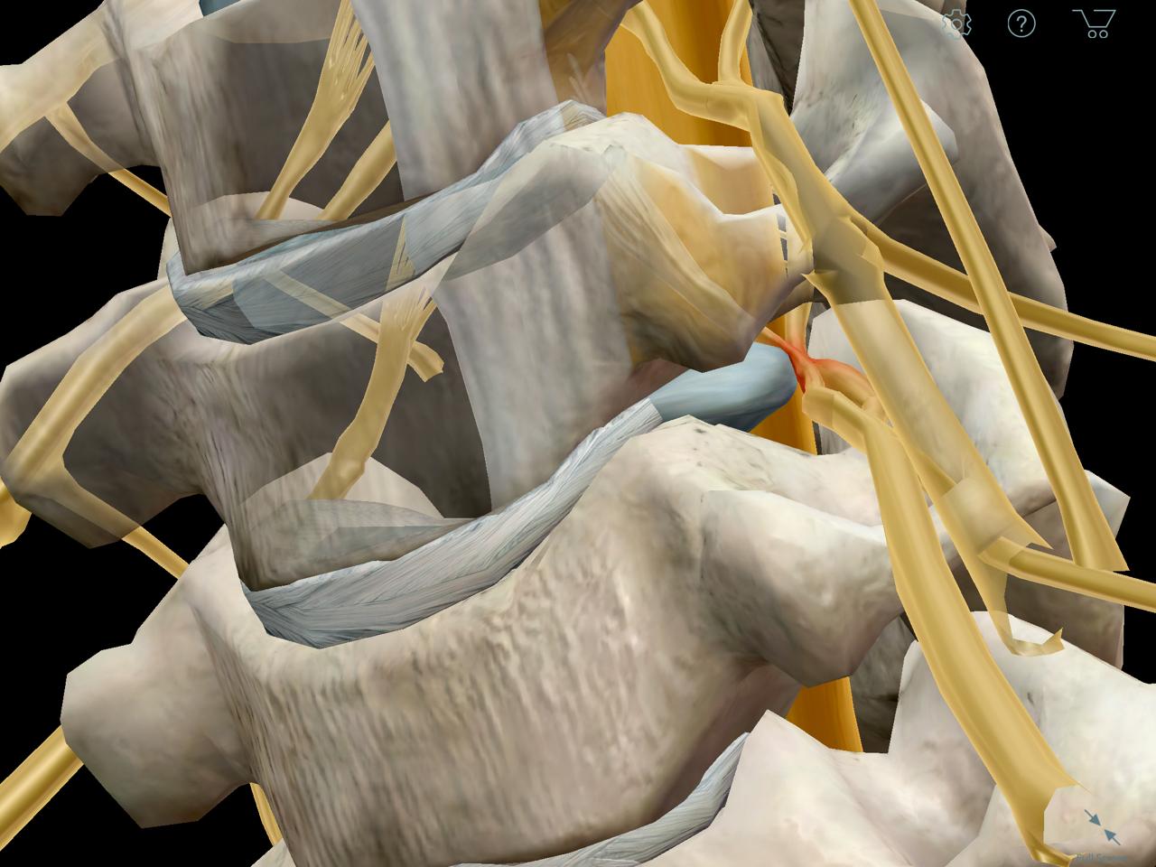 Anatomy Physiology Revealed (apr) App how to make a algorithm ...