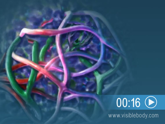 Click to watch an animation of lymph filtration