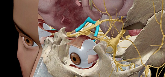 Anatomy and Physiology: The Anatomy of Vision