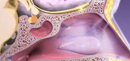 Learn Respiratory Anatomy: The Process of Olfaction