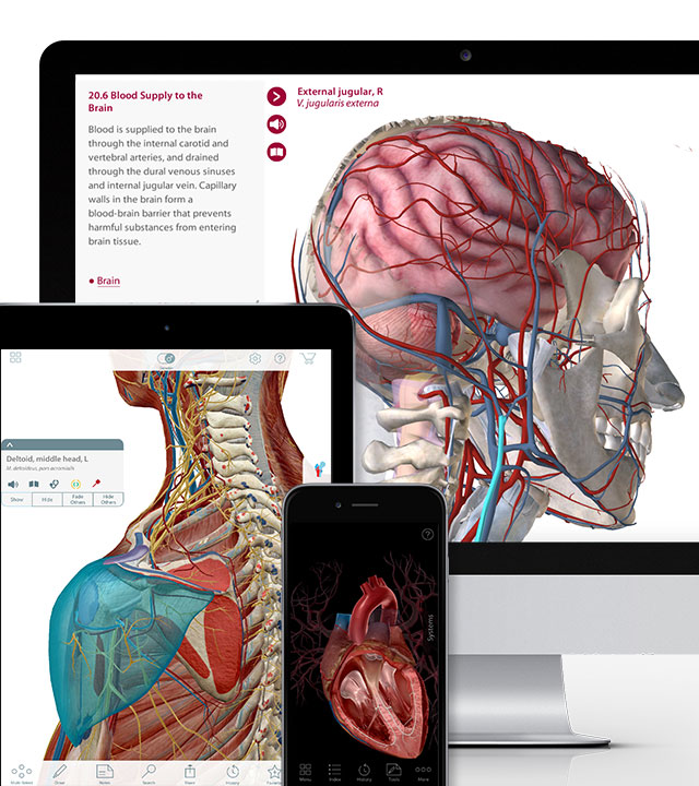Visible Body 3d Human Anatomy Apps