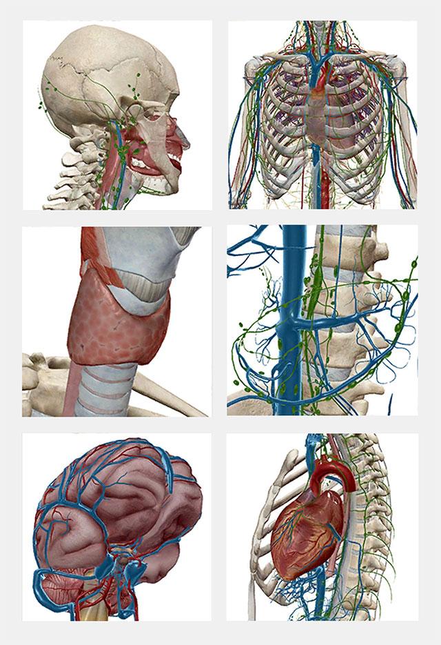 Human Anatomy Atlas Saved Views