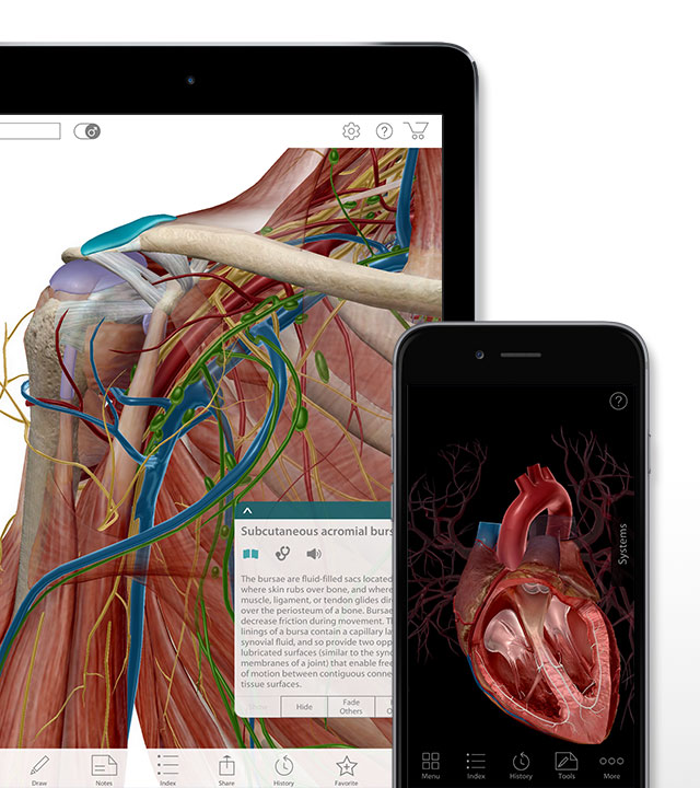 Human Anatomy Atlas in iOS devices