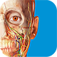 Visible Body's Human Anatomy Atlas