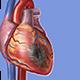 Visible Body Physiologie & Pathologie