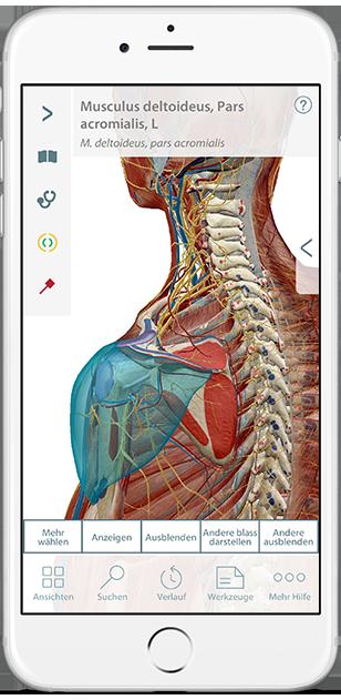 3d-models-of-bones-ligaments-de