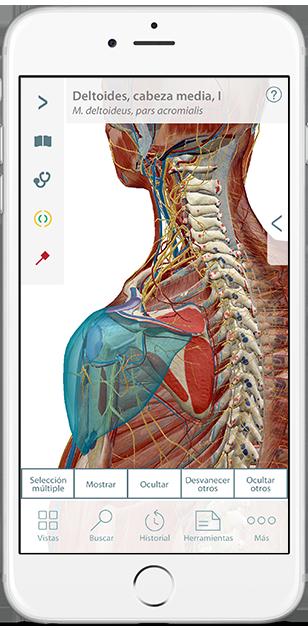 3d-models-of-bones-ligaments-es
