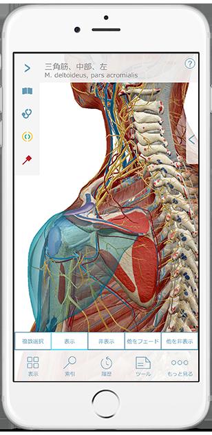3d-models-of-bones-ligaments-ja