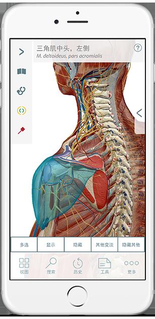 3d-models-of-bones-ligaments-zh