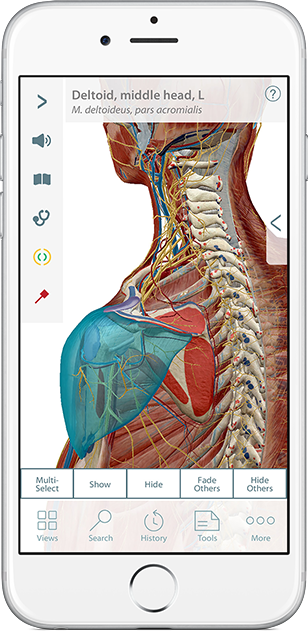 Muscle Premium showing view of shoulder muscular anatomy in 3D