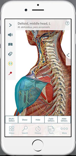 Muskel Premium - 3D-Atlas der Muskel-Skelett-Anatomie und -Funktion