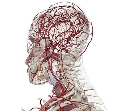 Visible Body - Virtuelle Anatomie für Einblicke in den menschlichen ...