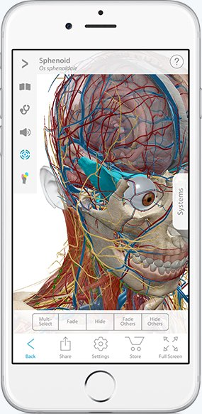 Human Anatomy Atlas showing 3D view of cranial anatomy