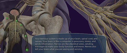 Visible Body - Anatomy Education Resources for Teaching and