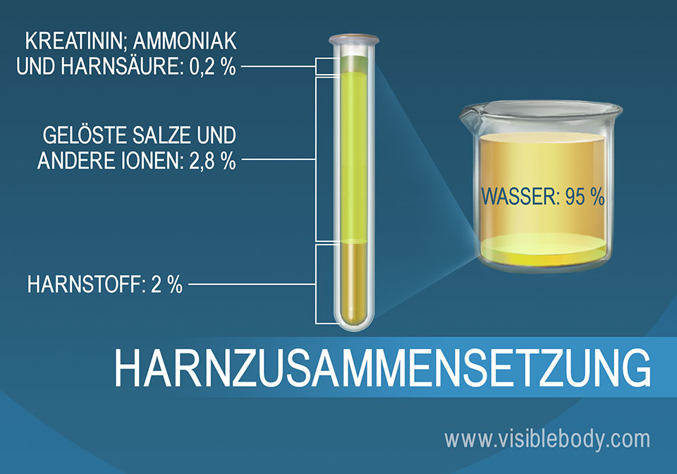 Die prozentuale Zusammensetzung der Salze, anderen Bestandteile sowie von Ammoniak, Harnstoff und Wasser im Urin