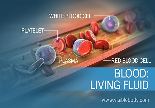 The composition and function of blood in the human body
