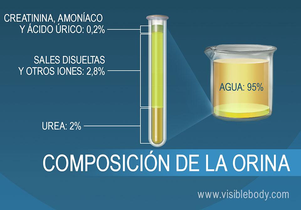 Composición porcentual de sales, amoníaco, urea, agua y otros componentes de la orina.