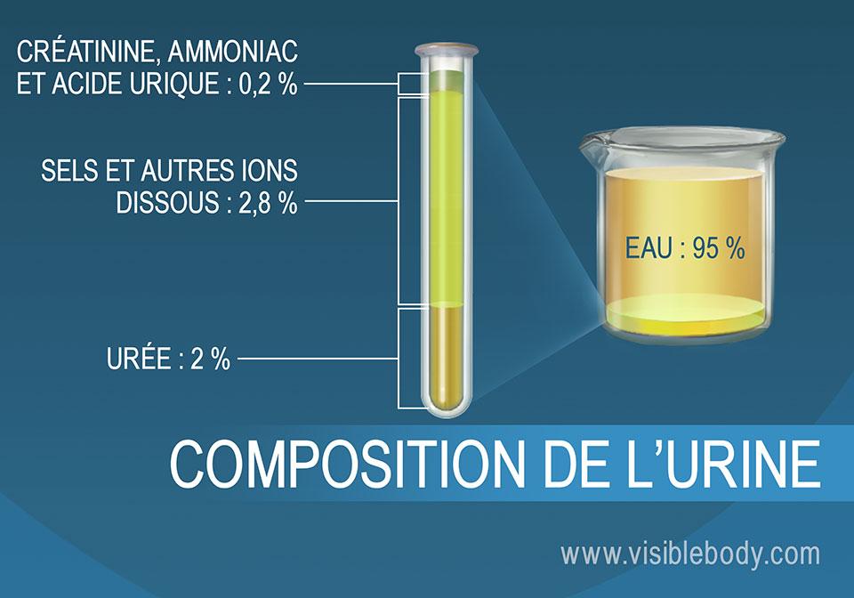 Composition en pourcentage des sels, de l'ammoniac, de l'urée, de l'eau et des autres composants de l'urine.