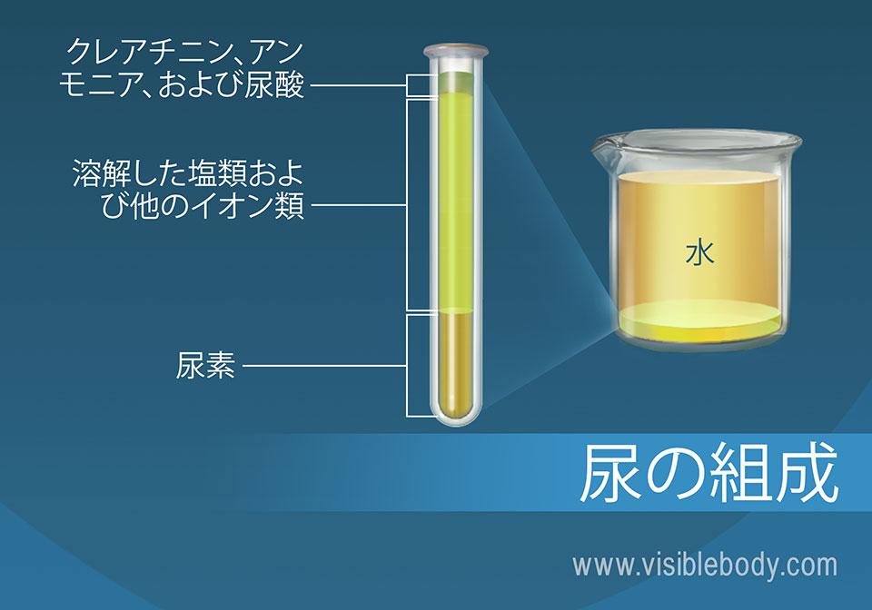 塩類の百分率組成は、アンモニア、尿素、水および尿の他の成分からなります。