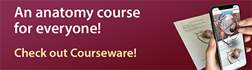 Learn in 3D or AR