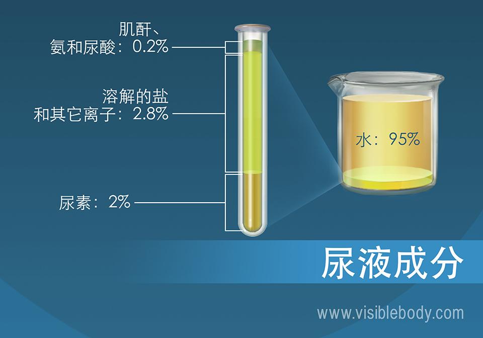 盐类、氨、尿素、水和其他尿液成分的百分比组成。
