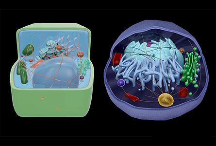 Courseware Biology showing 3d models of cells - prokaryotes and eukaryotes