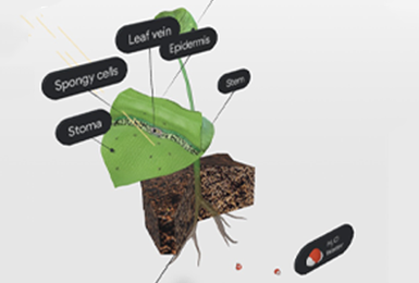 Courseware Biology showing photosynthesis