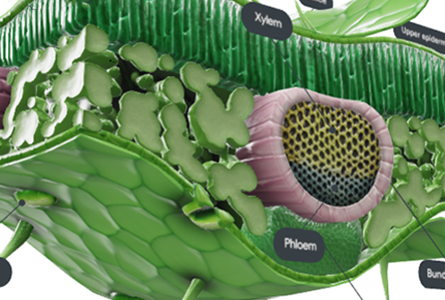 Courseware Biology showing 3d model of plant structures