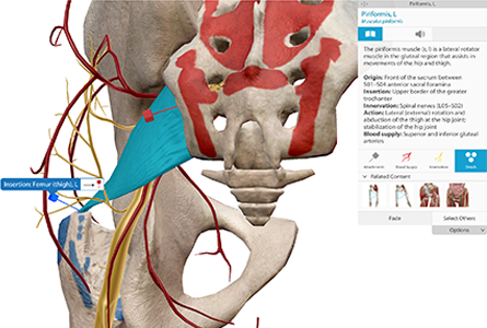 VB Courseware showing brain stem anatomy in 3d