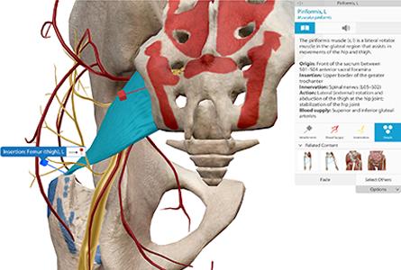 VB Courseware showing brain stem anatomy in 3d