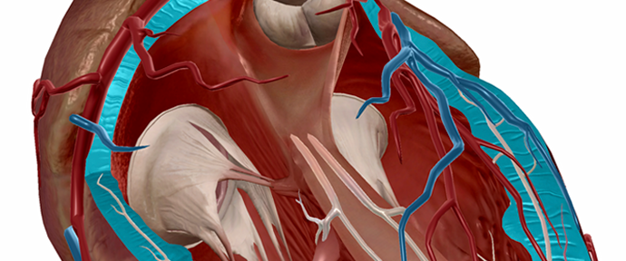 Free Anatomy eBooks