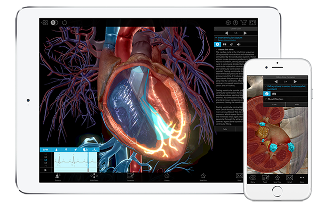 Tablet displaying 3d model of the heart and a phone displaying 3d model of a kidney