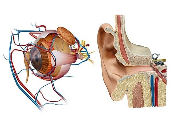 eye and ear lab