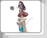 内分泌器官和功能