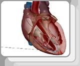Conduccióncardíaca