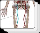 下肢和盆腔动脉