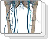 下肢和盆腔静脉