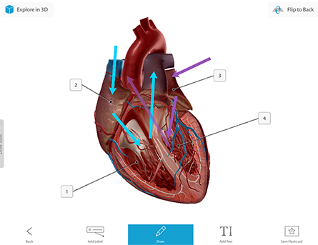 Watch how virtual dissection quizzing works