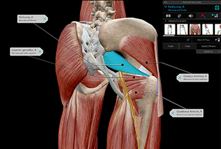 VB Courseware showing labeled anatomy layers in 3d